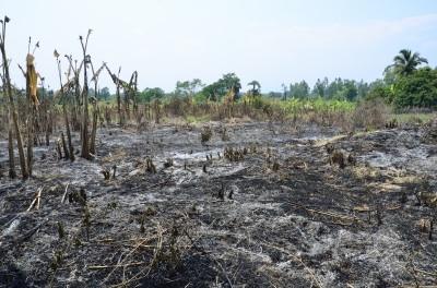 Dangerous loopholes in climate change framework