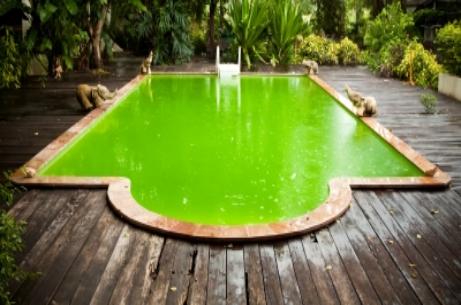 Fuelled by algae