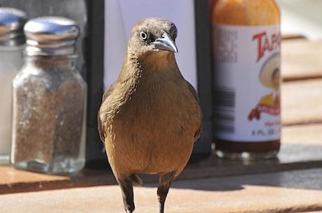 Small bird, big ambitions?