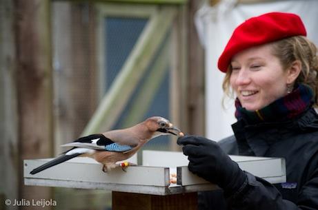 Bird brains or smart operators?