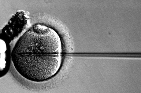 Scholars debunk idea that social egg freezing is empowering