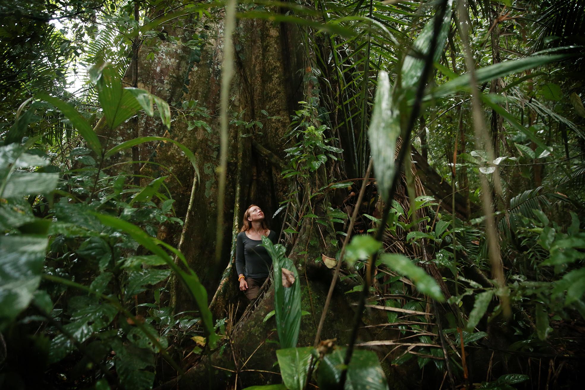 Saving the Amazonian jaguar