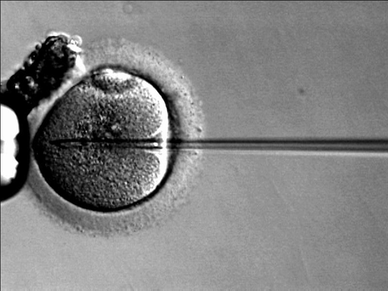 Egg donation 'needs to be regulated'