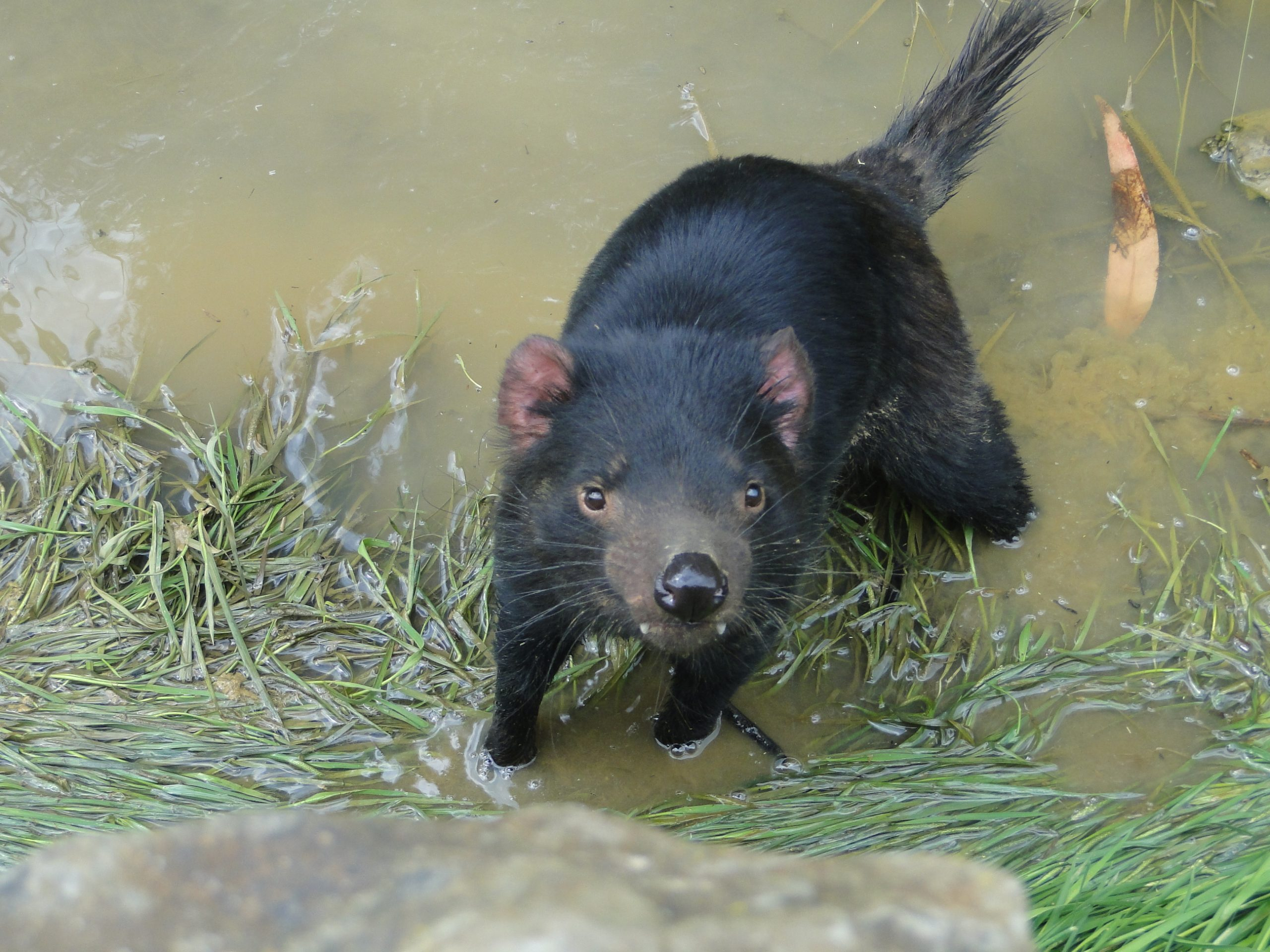 From Tasmanian Devils to bone regrowth
