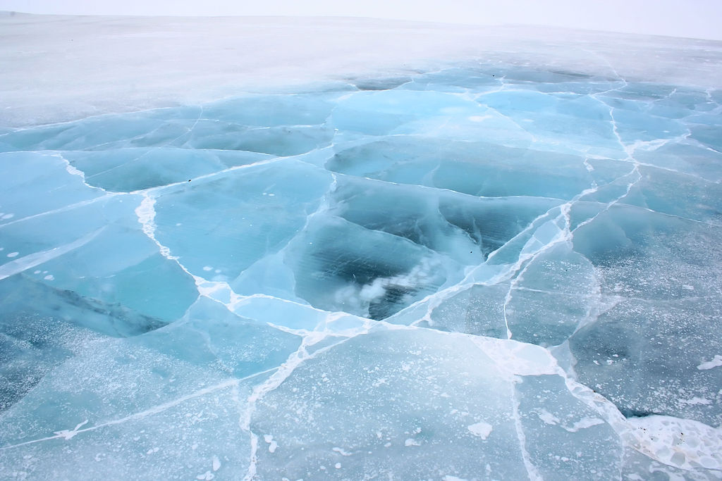 Using ancient DNA to document past sea ice change