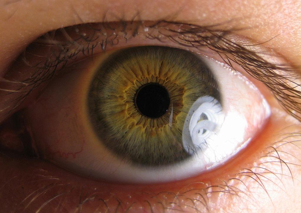Study offers hope for future glaucoma treatment
