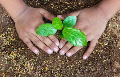 From Plant Sciences to biotech start-ups