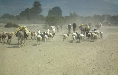 Knowledge gap on zoonotic disease transmission highlighted